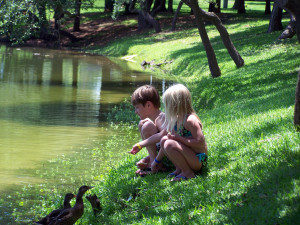 happy children feeding ducks